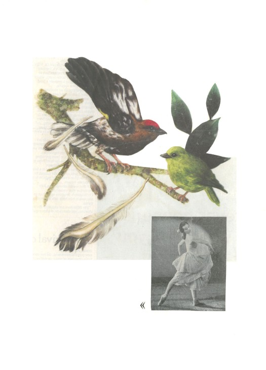© Egg of Casuarius - Entre tus plumas danzaré