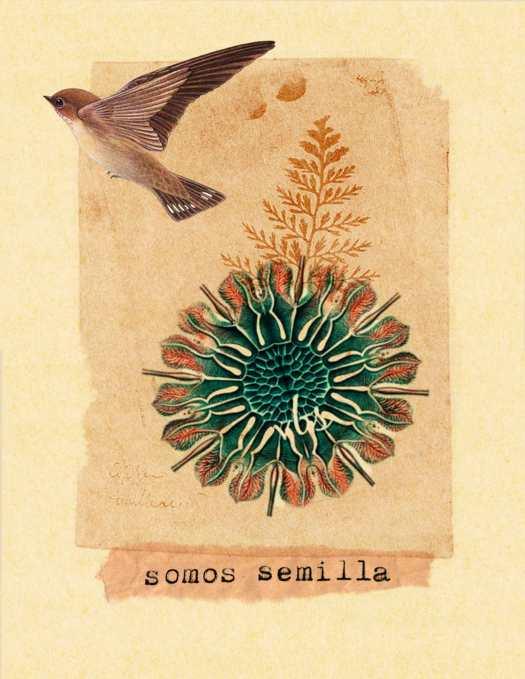 © Tatiana del Toro - somos semilla